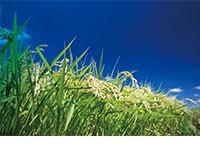 低タンパク米の製造・販売